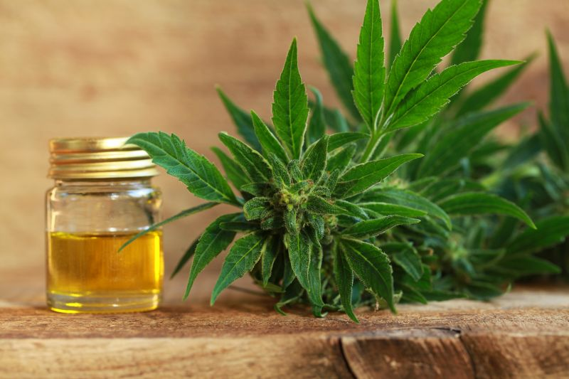 National CBD Day, Christmas, and St. Patrick's Day – Everyone Loves A Holiday